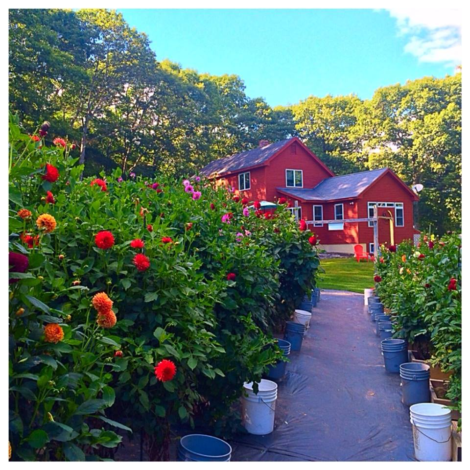 Endless Summer Flower Farm
