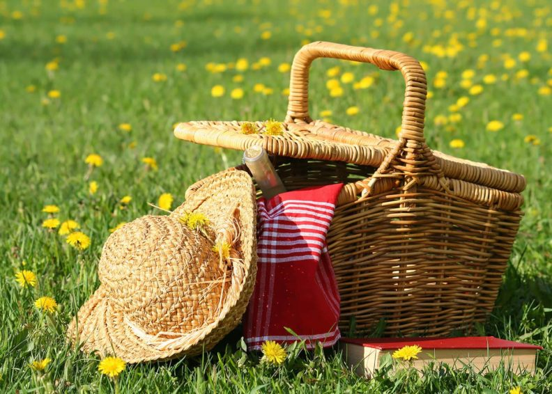 Picnic basket and book in summertime