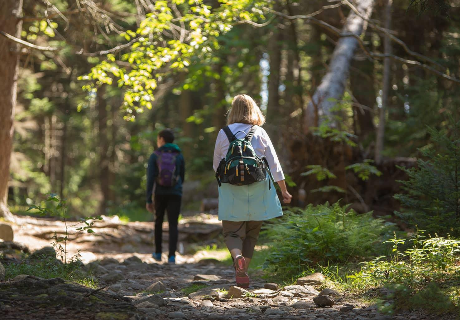 Nature Walk in Maine