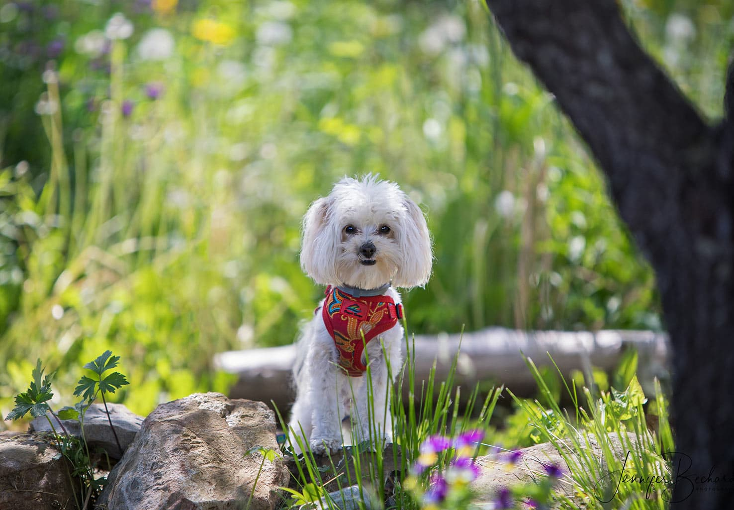 Cute small dog in Hartstone Inn Gardens